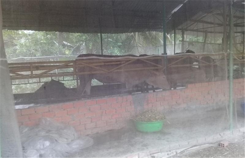 Chuồng nuôi bò và dê của anh Phong