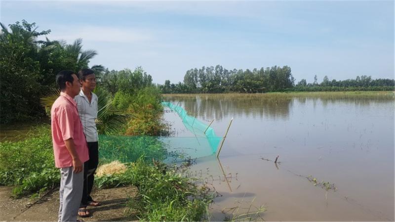 Ảnh: Mô hình nuôi cá ruộng của ông Phạm Văn Thủy